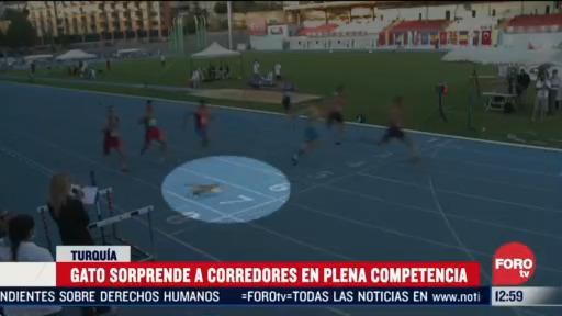 gato sorprende a corredores en plena competencia