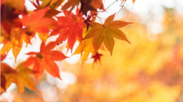otoño-de-2020-fecha-inicio