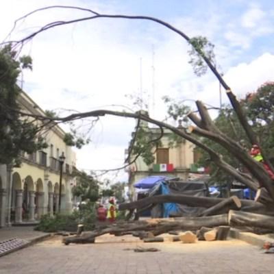 El acceso al zócalo de Oaxaca y la Alameda de León, continúa cerrado, por los trabajos de poda controlada