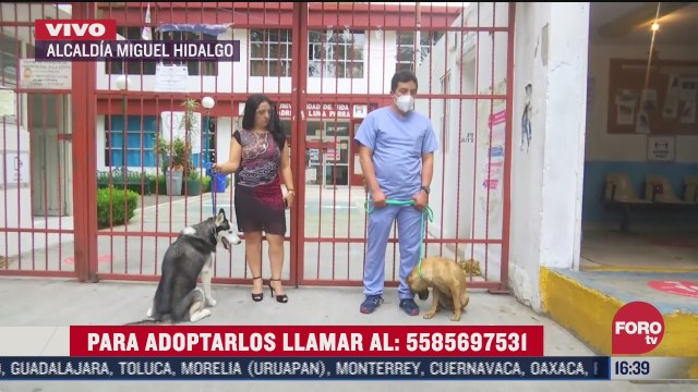 promueven adopcion de perros callejeros en miguel hidalgo