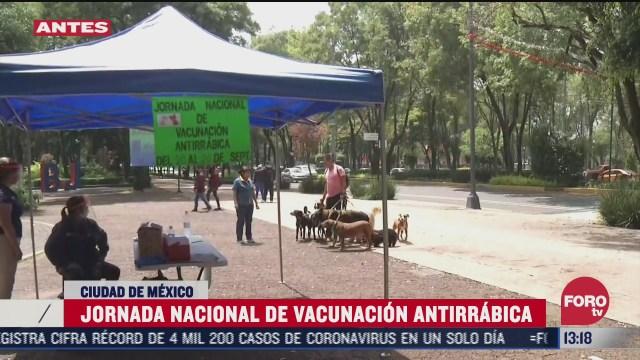 realizan jornada nacional de vacunacion antirrabica en la ciudad de mexico