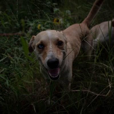 Rescatan a 25 perros que eran maltratados en alcaldía Cuauhtémoc, CDMX