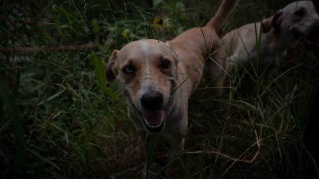 Rescatan a 25 perros que eran maltratados en CDMX
