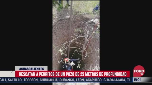 rescatan a perros de un pozo de 25 metros de profundidad en aguascalientes