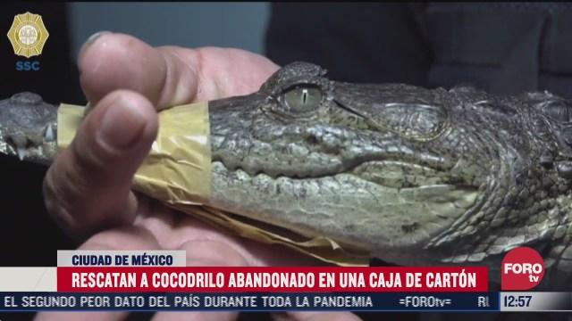abandonan a cocodrilo afuera de una casa en la cdmx