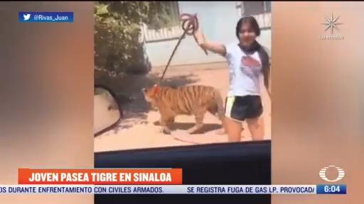 adolescente saca a pasear a su tigre en sinaloa