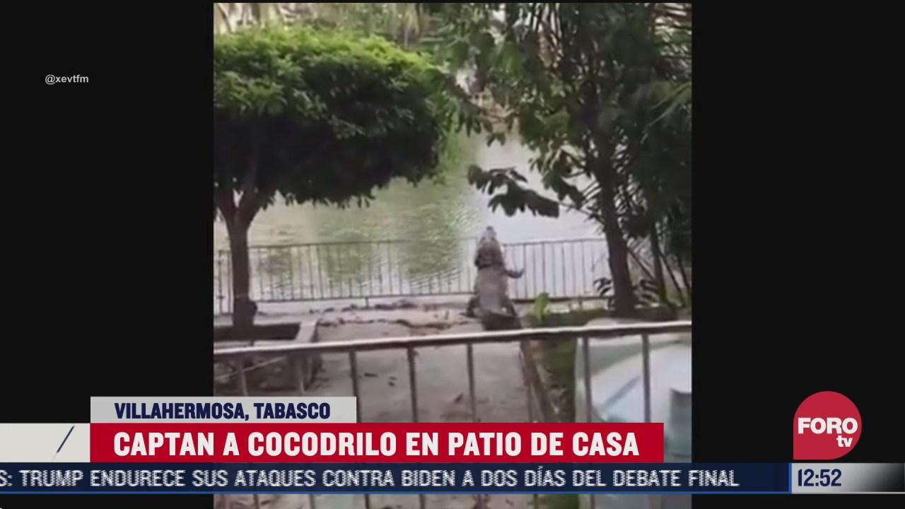 captan a cocodrilo en el patio de una vivienda en tabasco