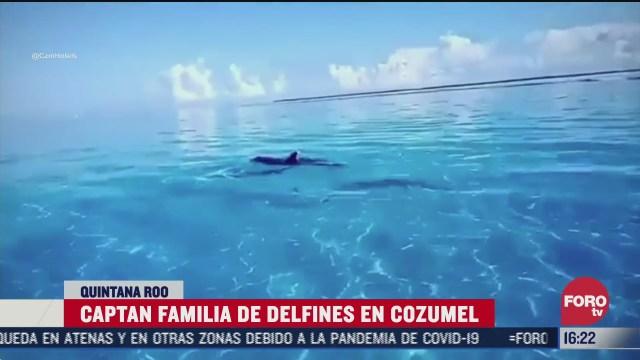 captan a familia de delfines en el mar de cozumel