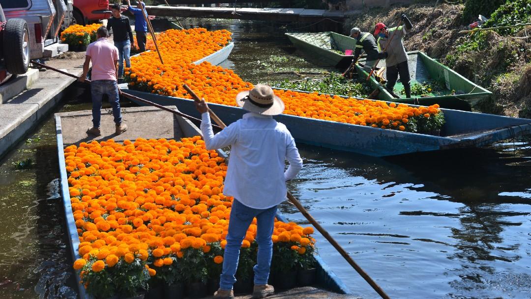 Recolección de flores de cempasúchil en Xochimilco