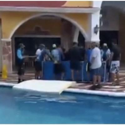 Reubican a delfines en alberca de hotel de Cozumel para protegerlos del huracán 'Delta'