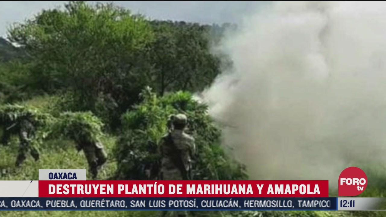 destruyen plantios de droga en oaxaca