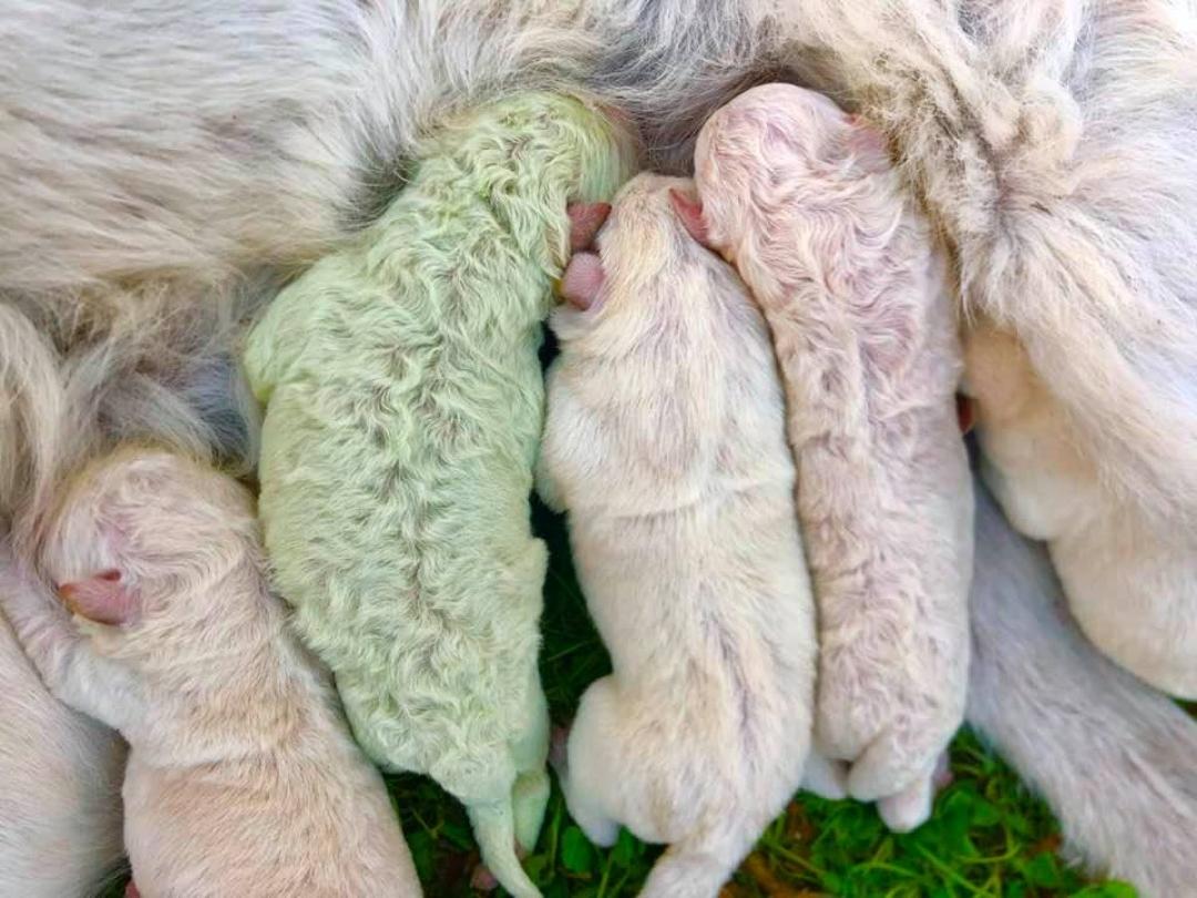Nace perrito de color verde en Italia y así luce