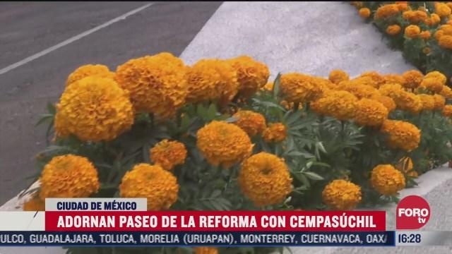 flores de cempasuchil adornan reforma