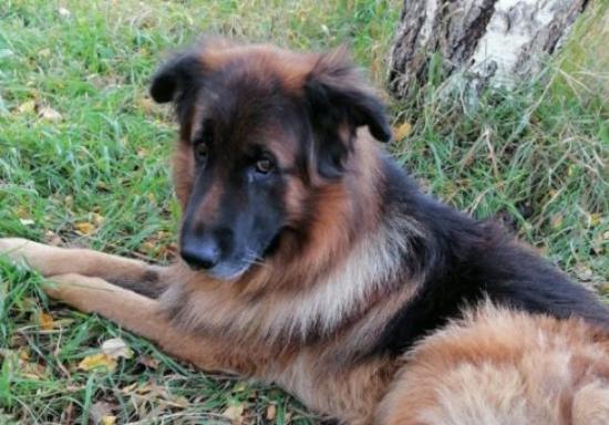 Perro sobrevivió inyección letal y escapó de su tumba
