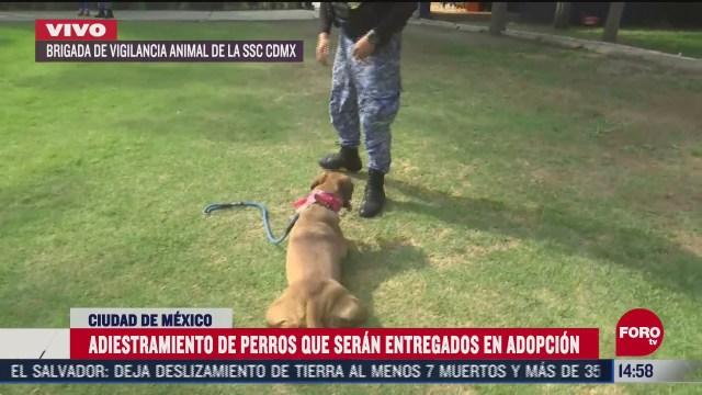 realizan adiestramiento de perros en adopcion
