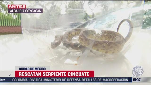 rescatan serpiente cincuate en calles de la alcaldia coyoacan