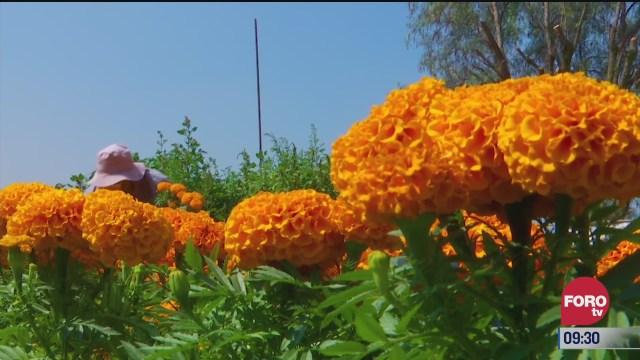 retratos de mexico productor de flor de cempasuchil