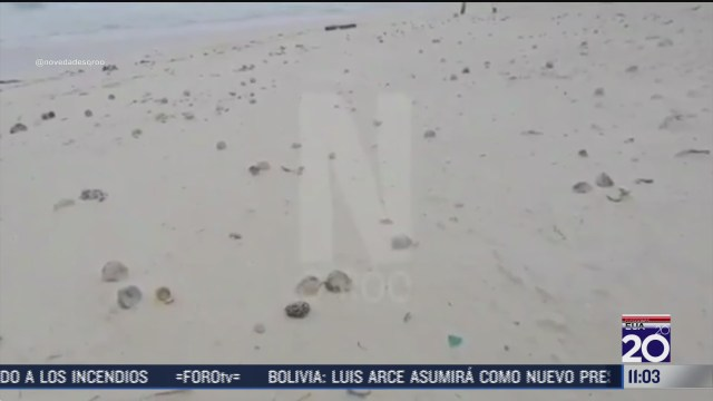 zeta destruye nidos de tortuga de playa marli en cancun