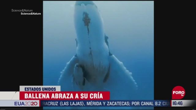 ballena abraza a su cria