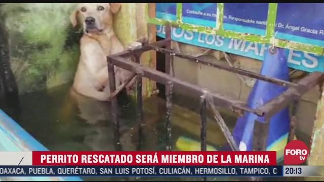 perrito rescatado en tabasco ya es miembro de la marina