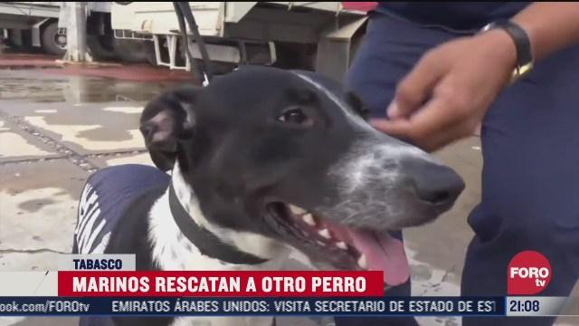 rescatan a otro perro en inundaciones de tabasco y ya le buscan nombre