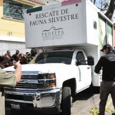 Vinculan a proceso a los dos detenidos en Iztapalapa por posesión de animales