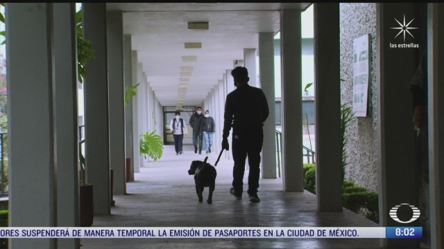 perrito cuco promueve la donacion de sangre en el imss