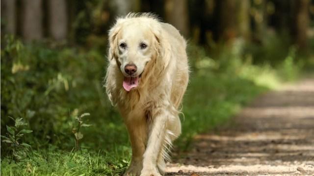 Familias-de-Florida-adoptan-a-20-perros-rescatados-en-China