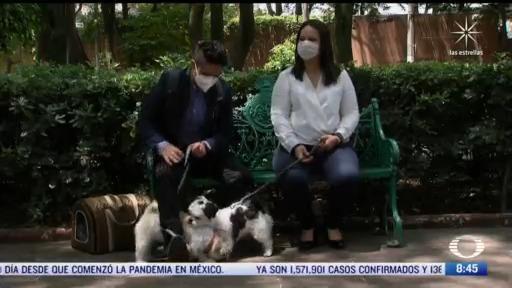 francisco alvarado el oftalmologo de los perritos y los gatitos