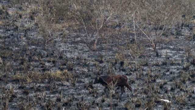 Ganado y agricultura, los más afectados por sequías en Guanajuato