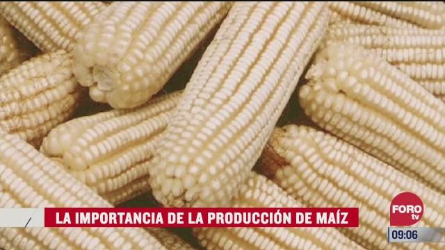 la importancia de la produccion de maiz