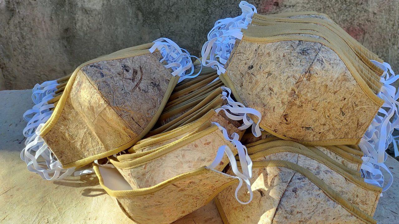 Crean cubrebocas biodegradable hecho de hoja de abacá