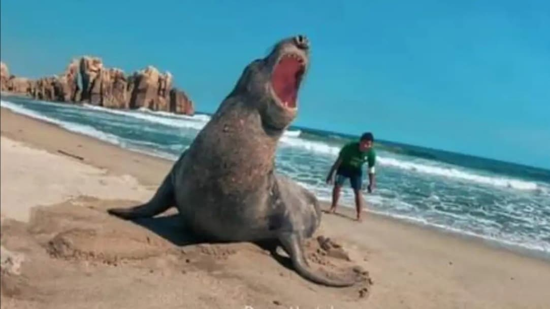 Elefante marino deja la costa de Oaxaca