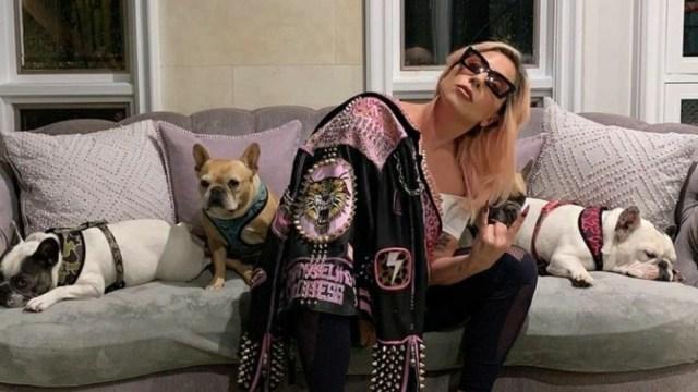 Lady Gaga ofrece recompensa de 500,000 dólares por sus dos perros robados