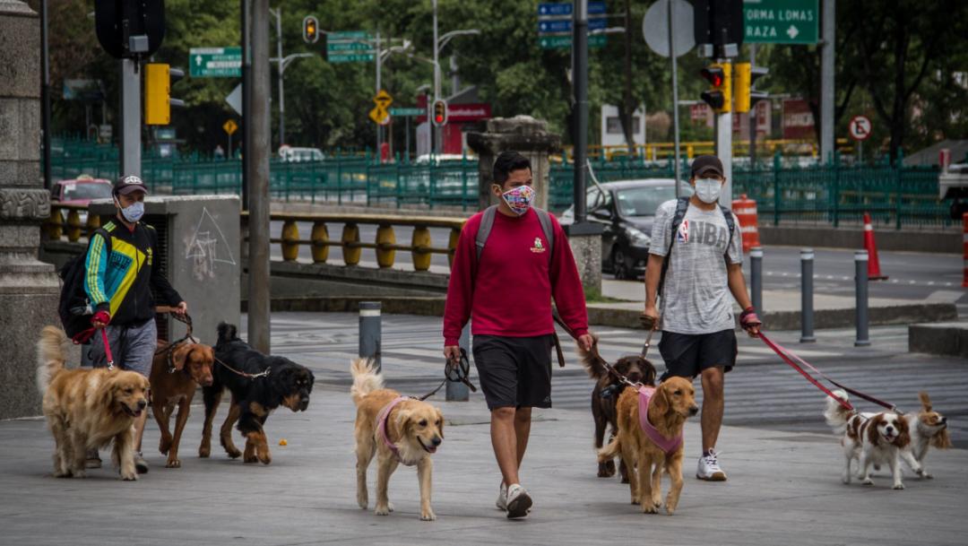 Dan trabajo comunitario por pasear perros sin correa en CDMX