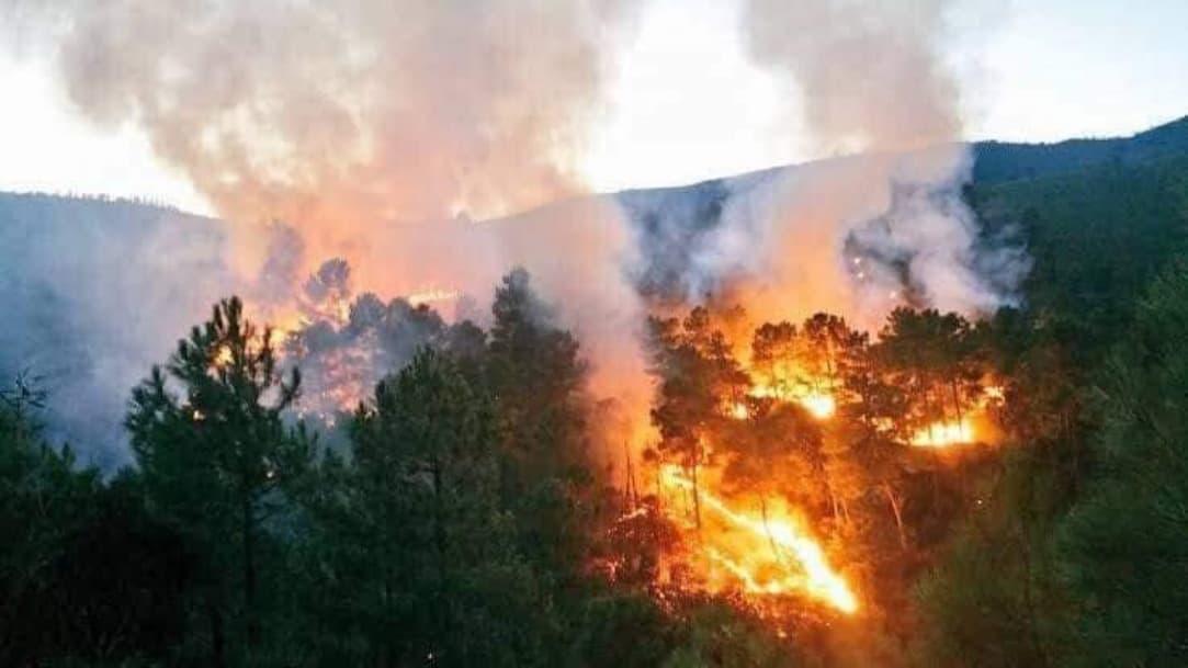 Zonas serranas de Oaxaca se consumen por incendios forestales