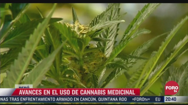 avances en el uso de cannabis medicinal en peru