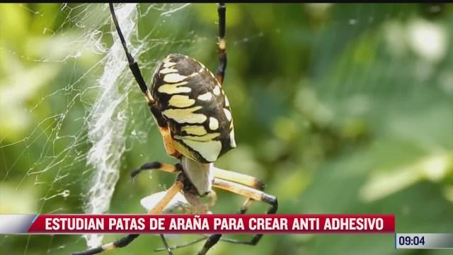 extra extra estudian patas de arana para crear anti adhesivo