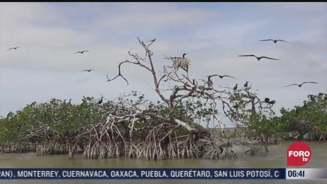 la isla de pajaros hogar de miles de aves endemicas y migratorias