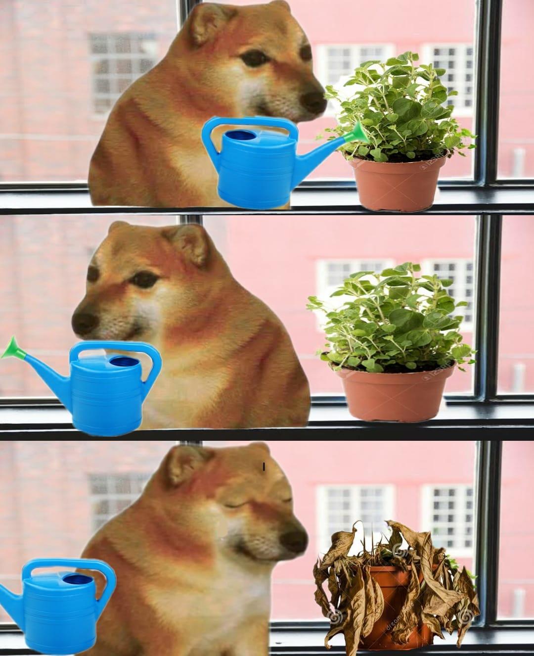 Cheems, perros, doge, memes