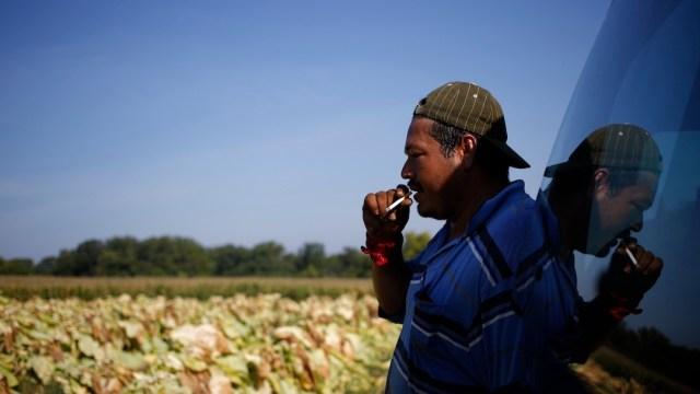 Un trabajador agrícola mexicano en el extranjero (Getty Images)