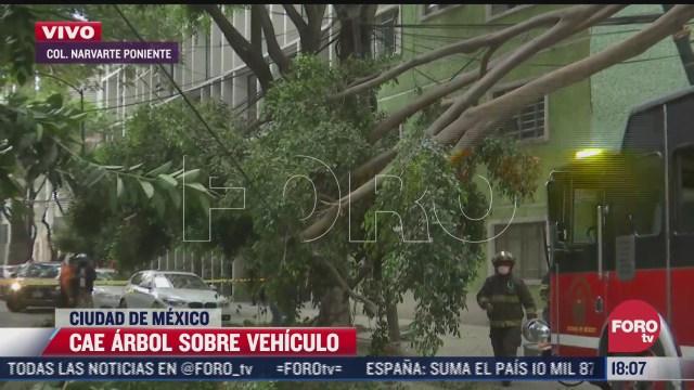 arbol de 15 metros se rompe y cae en calles de la colonia narvarte poniente