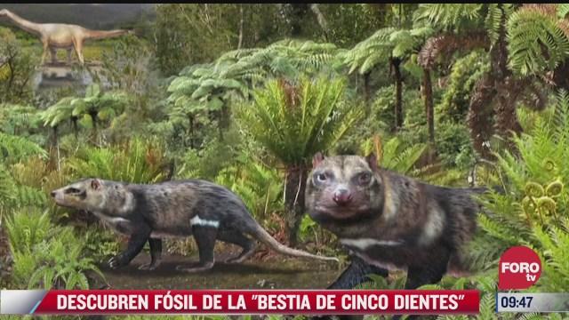 descubren bestia de cinco dientes que vivio al mismo tiempo que los dinosaurios