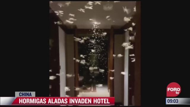 hormigas voladoras invaden hotel en china
