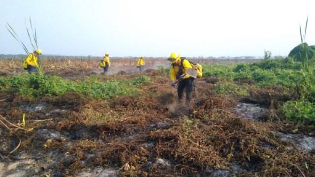 Incendio-forestal-en-Tembladeras-Veracruz