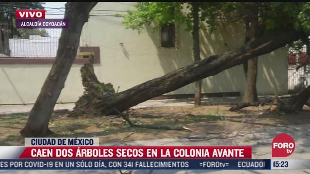 se registra arbol caido en calles de la alcaldia coyoacan