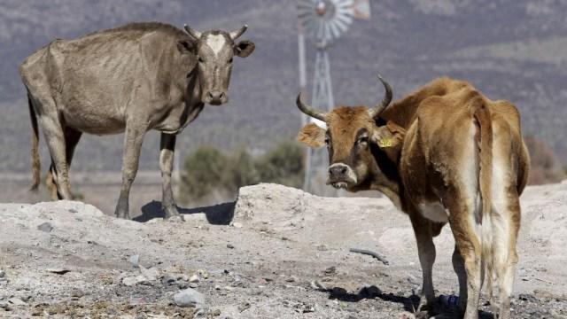 Sequía afecta cultivos y ganado de campesinos en Veracruz e Hidalgo