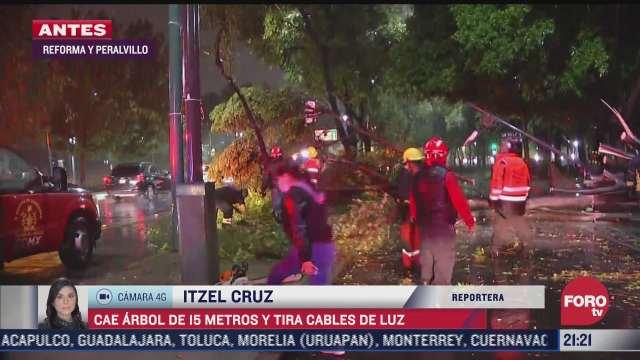caida de arbol de 15 metros provoca danos en cables