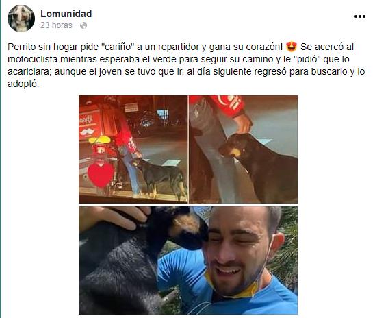 Repartidor adopta a perrito callejero que se encariñó con él