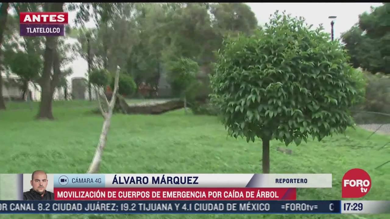 arbol cae por fuertes vientos en tlatelolco